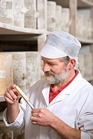 Cheese maker inspecting sample of farmhouse cheddar on cheese iron