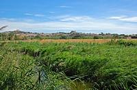 Gaia river nature reserve,tarragona,catalonia, spain