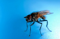 An extreme close up of a fly resting on a blue plastic paddling pool