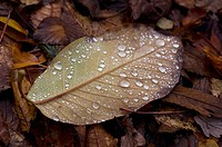 Close up of dew on autumn leaf