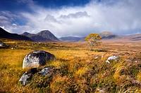 Autumn colours on Rannoch Moor, Highlands, Scotland, United Kingdom, Europe