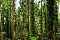 Dorrigo National Park, New South Wales, Australia, Pacific