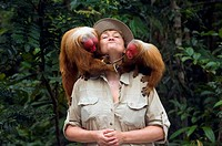Red uakari monkey with a visitor in a rehabilitation center, Amazon state, Brazil Cacajao calvus rubicundus MR GW The red uakari is one of the world's...