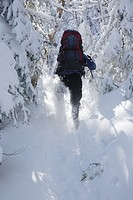 Snowshoer on North Twin Trail during the winter months in the White Mountains, New Hampshire USA