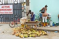 Native man sells coconuts at roadside stand Belize City Belize Central America