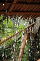 rain, pattern, cambodia, person, nature, people