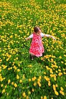girl playing in field of Dandelions, Zuercher Oberland, Zuerich, Switzerland
