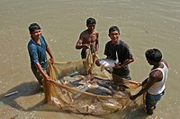 bangladesh, water, fish, person, people, business