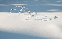 Sunlit details on the low vegetation covered by thick snow layer in winter, Oulanka, Kuusamo, Finland