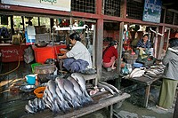woman food people border person fish myanmar se