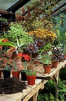 GREENHOUSE DISPLAY IN MID_SUMMER
