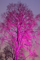 tree at night colored with searchlight beam