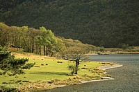 Cumbria, England, Crummock Water In Lake District National Park