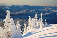 Oregon, United States Of America, Snow Covering Trees During A Winter Sunrise On Mount Hood In The Oregon Cascades