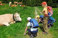 Children looking at cattel, Bavarian Alps, Upper Bavaria, Bavaria, Germany
