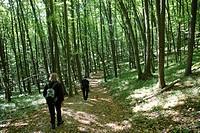 Hiking in Thayan national park, Lower Austria, Austria