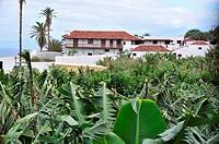 Houses at banana plantation, Tenerife, Canary Isles, Spain, Europe