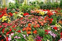 Garden center Luchon Francia