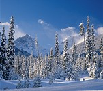 winter scenic in the Kootenay National Park with snow covered mountain tops of Brisco Range, Rocky Mountains, British Columbia, Canada