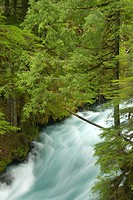 Upper McKenzie Wild and Scenic River, Willamette National Forest, OR
