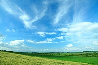 Crops in field against blue sky