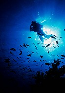 scuba diver seen from the sea bottom against sunshine on surface