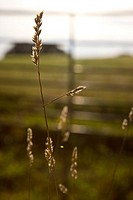 Close up of meadow grass stalks