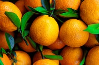 Close_up of oranges