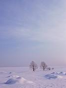 Snow_covered field in Hokkaido, Japan