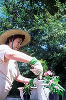 A senior woman potting a plant