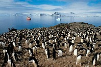ANTARCTICA, KING GEORGE ISLAND, ADELIE PENGUIN COLONY WITH MS WORLD DISCOVERER IN BACKGROUND
