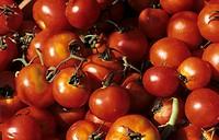 Several Vine Ripened Tomatoes