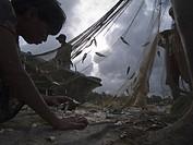 Child picking up a shell fallen down from a fishing net, Sri Lanka, Negombo