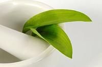 Ramsons wild garlic leaves in mortar