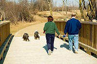 Couple walking their dogs at a nature preserve in Northern Illinois  Cuba Marsh