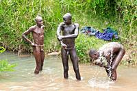Before the Donga stick fight, the Surma warriors apply a body paint made of clay and mineral on their bodies, Surma tribe, Tulgit, Omo river valley, E...