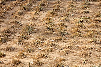 China is in the middle of the worst drought in 50 years Precipitation totals have fallen significantly across most of China´s northern provinces 60 of...
