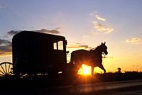 Amish horse-drawn buggy, Lancaster County, Pennsylvania, United States