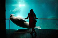 L´Oceanogràfic, a Marine Park located in the City of Arts and Sciences of Valencia, Spain  It invites us to travel around the planet´s main seas and o...