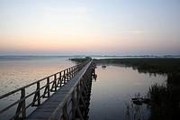Federsee lake, morning mood, Federsee lake area, nature reserve near Bad Buchau, Biberach district, Upper Swabia, Baden-Wuerttemberg, Germany, Europe