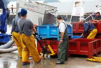 Unloading fish from boat at port with a suction pump, Santoña, Cantabria, Spain