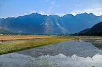 Workers in a rice field, Mai Chau, a village where ethnic minorities live, Vietnam, Southeast Asia