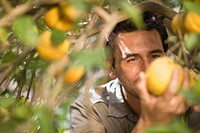 Man picking orange