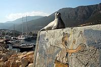 Seal, sculpture, wall painting in the port of Kas, Lycian coast, Antalya Province, Mediterranean, Turkey, Eurasia