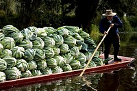 A man carry vegetable in a boat in the water canals of Xochimilco in southern Mexico City, January 18, 2009  The water canals and gardens in Xochimilc...