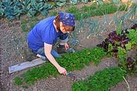 Young woman gardening, working in an organic home garden