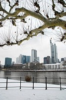 The grey skyline of the financial district and a tree, winter in Frankfurt am Main, Hesse, Germany, Europe
