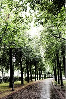 Pedestrian avenue after a summer rain, Bavariaring, Munich, Bavaria, Germany, Europe