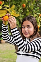 Girl picking oranges from the tree