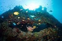 Stern of Liberty Wreck, Tulamben, Bali, Indonesia